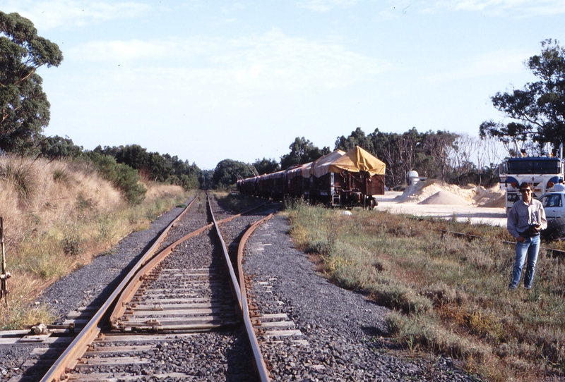 118322: Buffalo Looking towards Yarram VOCX Superphosphate Wagons Chris Banger